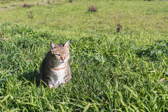 Domestic cat in outdoor. Cute domestic cat in the outdoor Stock Images