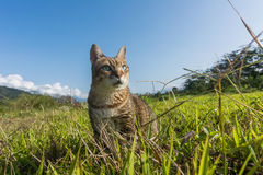 Domestic cat in outdoor Stock Photo