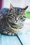 Domestic cat on painted wood bench Stock Photo