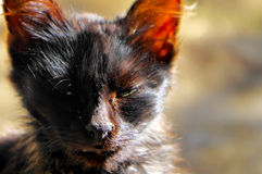 Domestic cat. Photographed on a sunny day Stock Photo