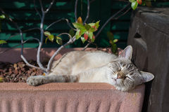 Domestic cat playing outdoors Royalty Free Stock Photos