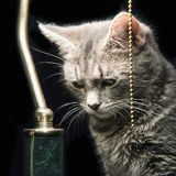 Domestic Cat. Portrait of a domestic Cat near a lamp Stock Photos