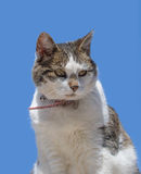 Domestic cat posing against a blue sky Stock Image