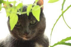 The domestic cat among the potted plants. Domestic cat hiding in house plants Royalty Free Stock Image