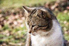 Domestic cat pursues prey Royalty Free Stock Photos
