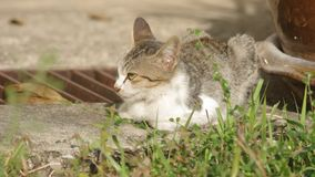 Domestic cat relaxing on the floor stock video