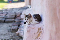 Domestic cat relaxing Royalty Free Stock Image