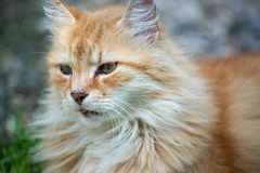 Domestic cat resting outside on the sun. Very peacfuill and nice look to relax royalty free stock photography
