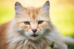 Domestic cat resting outside on the sun. Very peacfuill and nice look to relax stock image