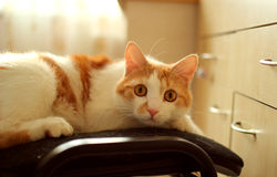 Domestic cat sitting Stock Photo