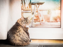 Domestic cat sitting in a glass balcony door Stock Photos