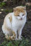 Domestic cat sitting on the ground,. Enjoying nature Royalty Free Stock Photo