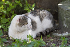 Domestic cat sitting on the ground,. Enjoying nature Stock Images