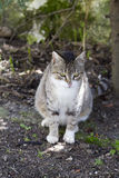 Domestic cat sitting on the ground,. Enjoying nature stock photography