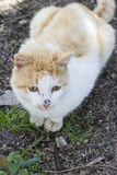 Domestic cat sitting on the ground,. Enjoying nature Royalty Free Stock Images