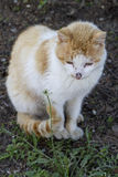Domestic cat sitting on the ground. Enjoying nature Royalty Free Stock Photos