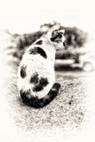 A domestic cat sitting and prowling on a hillock. Stock Photography