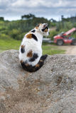 A domestic cat sitting and prowling on a rock Royalty Free Stock Image
