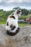 A domestic cat sitting and prowling on a rock Stock Photography