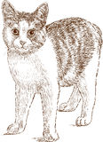 Domestic cat sketch. Vector image of a young domestic cat Stock Images
