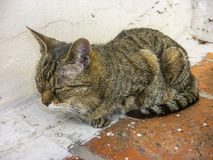Domestic Cat Sleeping at the Roof Royalty Free Stock Images