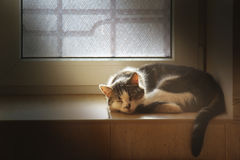 Domestic cat sleeping on tile windowsill lit by sunlight Stock Photo