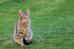 Domestic cat on a spring grass Stock Photos