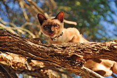 Domestic cat stalking birds high up top in tree