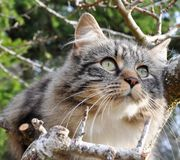 Domestic cat in tree Stock Image