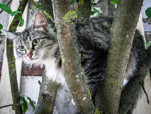Domestic cat on the tree. The domestic cat is a mammal of the family Felidae of the Carnivora. Previously a domestic cat was often seen as separate biological stock images