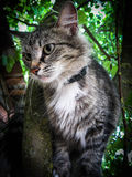 Domestic cat on the tree. The domestic cat is a mammal of the family Felidae of the Carnivora. Previously a domestic cat was often seen as separate biological stock photo
