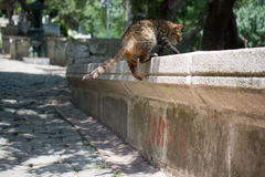 Domestic cat in view out in the street of town. Domestic cat in view out in the street of the town stock photos