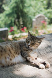 Domestic cat in view out in the street of town. Domestic cat in view out in the street of the town royalty free stock image