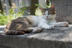 Domestic cat in view out in the street of town. Domestic cat in view out in the street of the town royalty free stock photo
