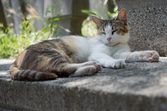 Domestic cat in view out in the street of town. Domestic cat in view out in the street of the town stock photo