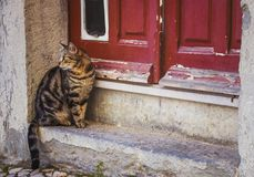 A domestic cat is waiting for the mistress at the entrance to the door Royalty Free Stock Image