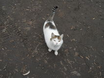 A domestic cat on wet ground Stock Photography