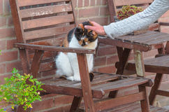 Domestic cat on a wooden chair. Stock Photo