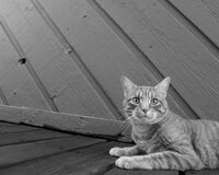 Domestic cat on wooden walk