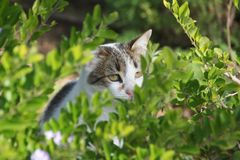 Domestic cats amongst shrubs royalty free stock photography