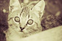 Domestic cats Stock Image