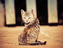 Domestic cats Stock Photos