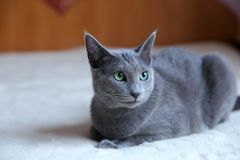 Domestic cats are great pets to cuddle and hug. Cats are wonderful animals and run to meet each other every day Stock Photos