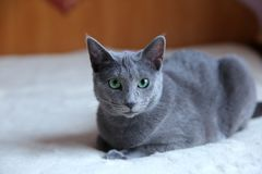 Domestic cats are great pets to cuddle and hug. Cats are wonderful animals and run to meet each other every day Royalty Free Stock Images