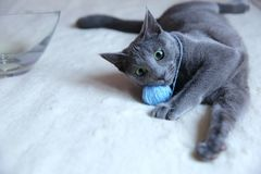 Domestic cats are great pets to cuddle and hug. Cats are wonderful animals and run to meet each other every day Royalty Free Stock Photo