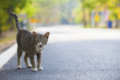 Domestic cats standing on asphalt road Stock Photos