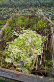 Domestic compost heap Royalty Free Stock Photo