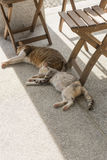 Domestic couple cat. Sleep together on the ground Stock Photography