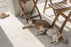 Domestic couple cat. Sleep together on the ground Stock Photos