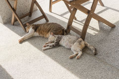 Domestic couple cat. Sleep together on the ground Royalty Free Stock Photography